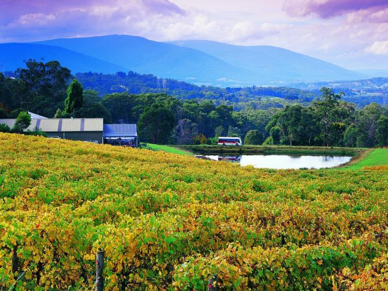 Sydney - Blue Mountains - Canberra - Melbourne - Yarra Valley ( Thưởng thức trái cây)