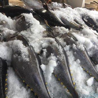 Cá Ngừ Đại Dương Nguyên Con