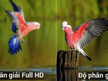 Theo bạn Tivi Full HD và tivi 4K độ phân giải có độ chênh lệch hay không?