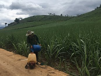 """Đừng để nông dân trồng mía """"chết"""" vì hội nhập"""