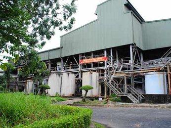 Nhà máy mía đường duy nhất ở Cà Mau ngừng thu mua mía