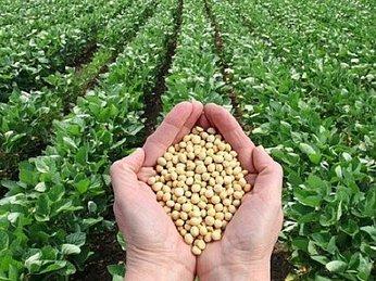 Nông dân Brazil bỏ mía đổ xô sang trồng đậu tương bán cho Trung Quốc