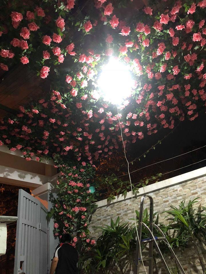 Giàn hoa hồng dây leo