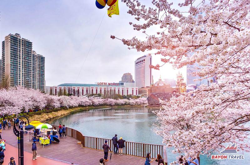 Du lịch Hàn Quốc mùa hoa anh đào Seoul-Nami-Everland-Hoàng Cung 4N4Đ