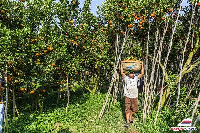 Tour du lịch Đồng Tháp: Tràm chim Tam Nông - Cần Thơ: Cồn Sơn 2N1Đ