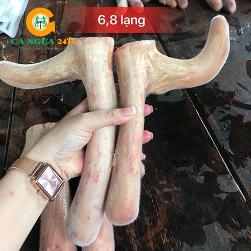 Nhung Hươu Tươi Hương Sơn Nguyên Sừng - Uy Tín Chất Lượng