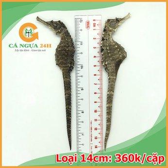 Cá Ngựa Đại Dương Khô 14cm