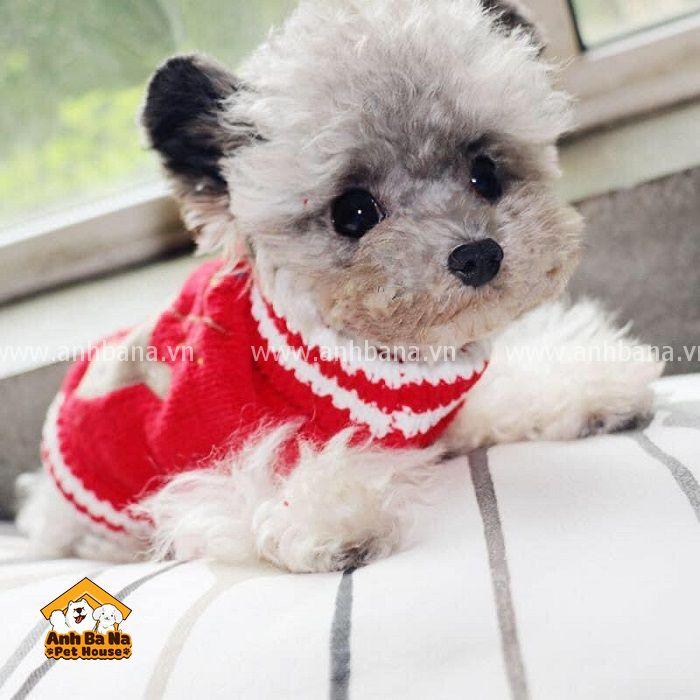 Áo len cho chó mèo màu đỏ hình tuần lộc