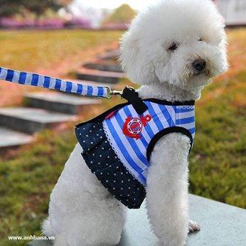 Bộ áo dây dắt chó nhỏ sọc xanh