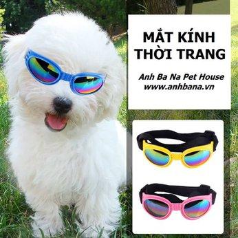 Mắt kính cho chó nhiều màu sắc