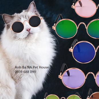 Mắt kính cho mèo