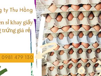 Bán sỉ rẻ khay giấy đựng trứng tại Bình Tân, Tân Phú, Bình Chánh