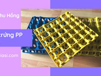 Khay để trứng bằng nhựa PP dùng nhiều lần giá tốt cho đại lý