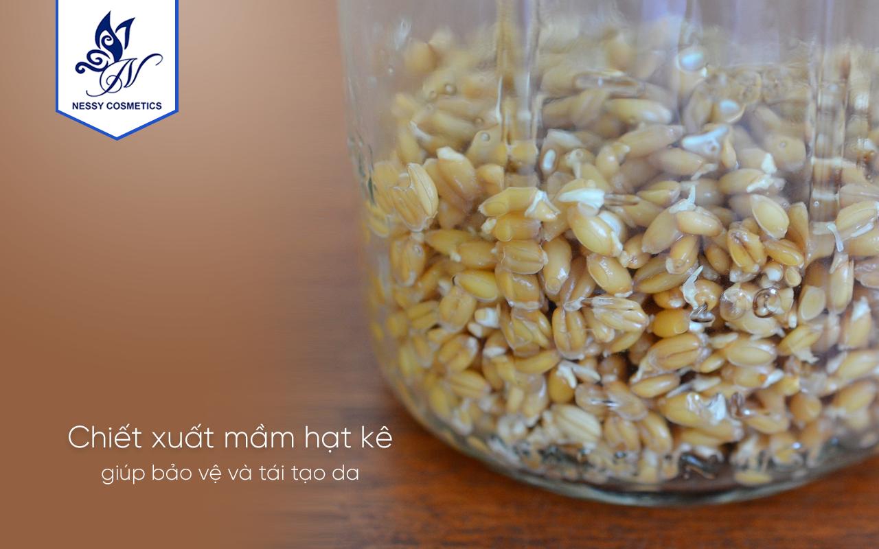 Chiết xuất Mầm hạt Kê - Nguyên Liệu Mỹ Phẩm