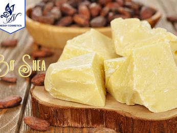 Bơ hạt mỡ là gì? 22 công dụng của bơ shea