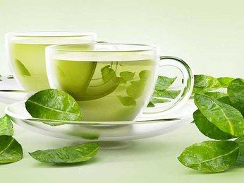 Tinh dầu trà xanh là gì ? Công dụng của tinh dầu trà xanh