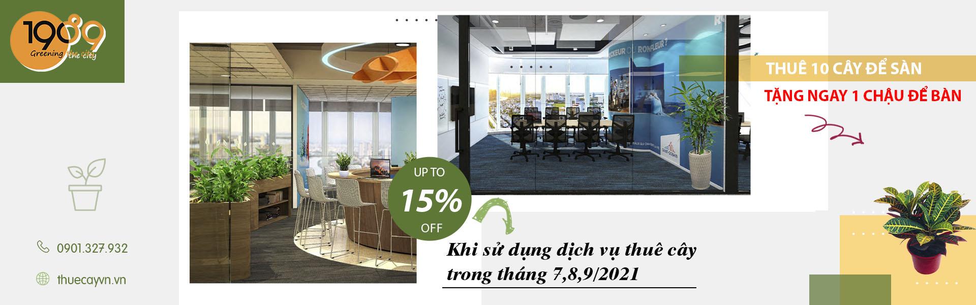 dịch vụ thuê cây xanh văn phòng tphcm