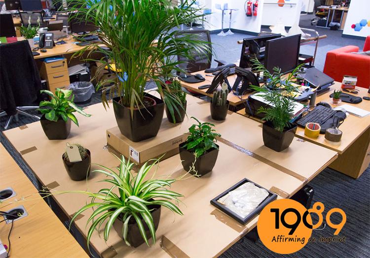 Chị em văn phòng đặt cây nội thất nên cân nhắc số lượng cây nhé