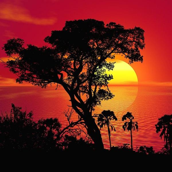 AFRICAN MUSK (HƯƠNG XẠ HƯƠNG CHÂU PHI)
