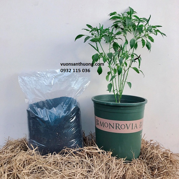 Đất trộn hữu cơ dành riêng cho rau ăn lá