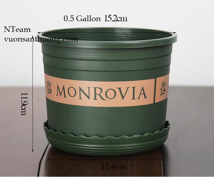 CHẬU MONROVIA LÙN - 0.5 GALLON (KÈM DĨA LÓT)