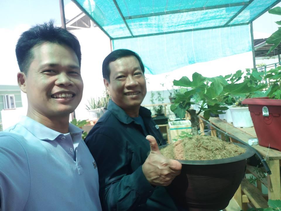 Khách hàng đến tham quan và đặt cọc cây Sung Mỹ Bonsai tại 7kg