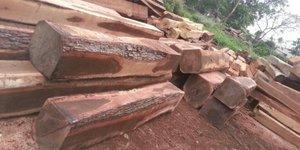 Bán gỗ muồng đen