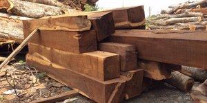 Giá gỗ muồng đen
